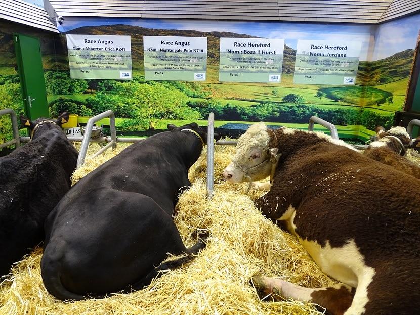 Salon agriculture 3_onatestepourtoi