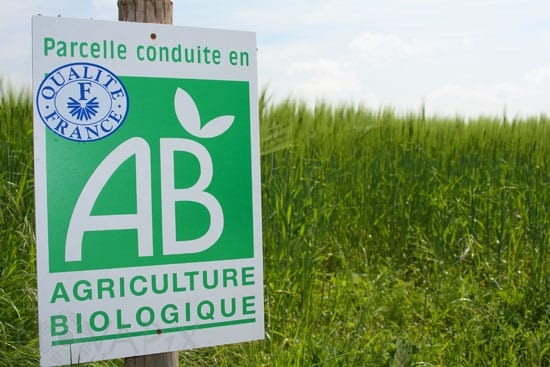 Champ d'orge en agriculture biologique dans la Marne. Sign in an organic barley cultivation in France.