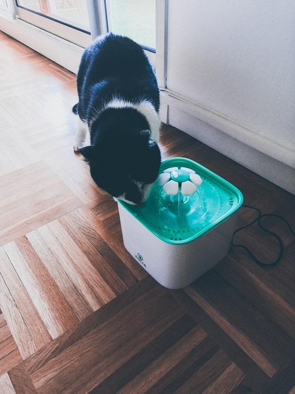 La fontaine d'eau pour chat achetée chez Zoomalia #zooanimals #chat #cats #animals #maison